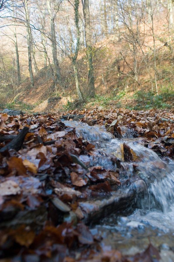 Download Stream in countryside stock image. Image of motion, creek - 1543277