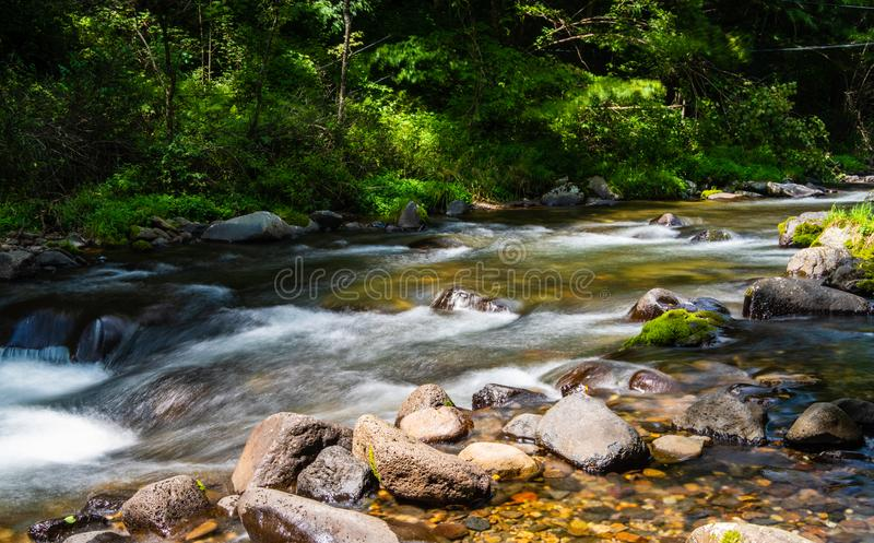 Stream in dense forest. Beautiful waterfall with clear water among dense forest royalty free stock images
