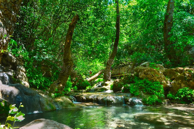 Stream flowing through trees vertical stock image