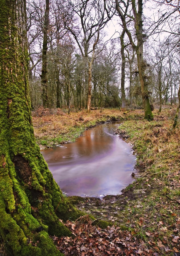 Download Stream Flowing Through Winter Forest Stock Image - Image: 24231965