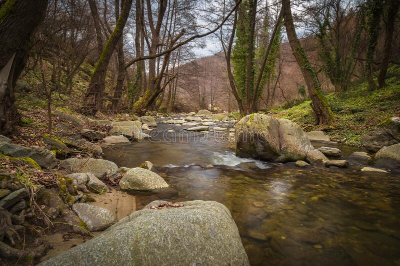 Stream flowing through woods royalty free stock photo