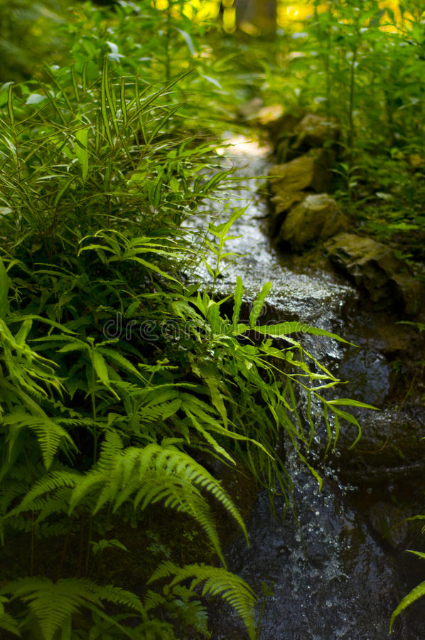 Stream in the Forest stock images