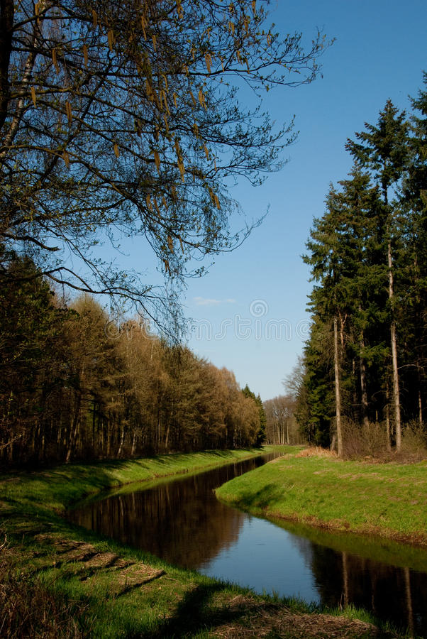 Stream through a forest stock image