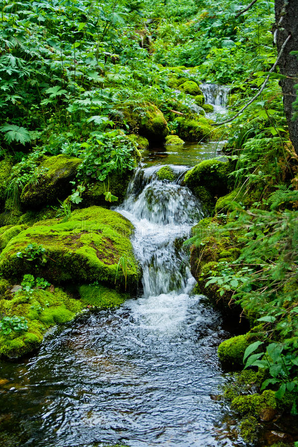 Download Stream in forest stock photo. Image of beauty, nature - 23841352