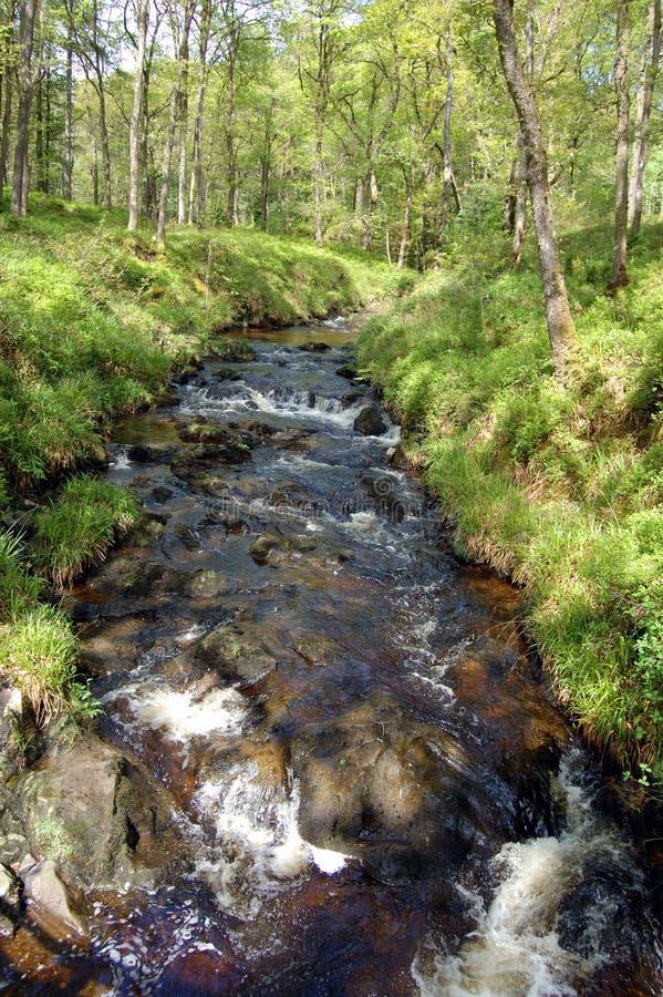 Stream in Forest Park wider. Stream in Queen Elizabeth Forest Park, Aberfoyle, Scotland royalty free stock photos