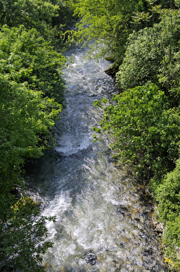 Download Stream through the forest stock image. Image of scenery - 33671329