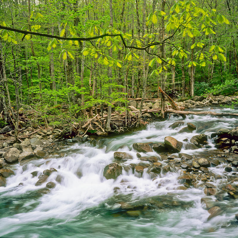 Stream in Great Smokey Mountains National Park stock image