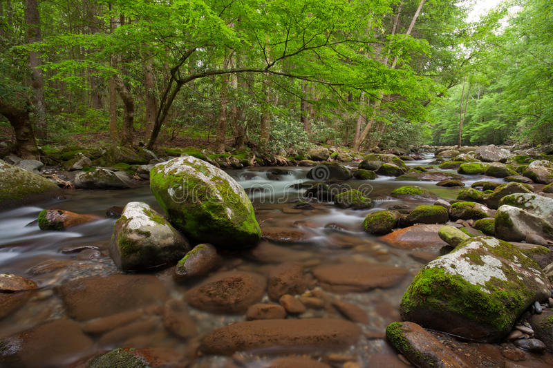Stream , the Great Smoky Mountains National Park