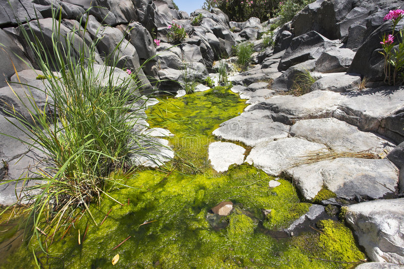 Stream with green ooze stock photos