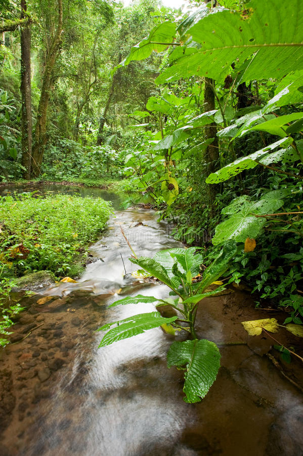 Free Stream In Rain Forest Royalty Free Stock Photo - 14410645