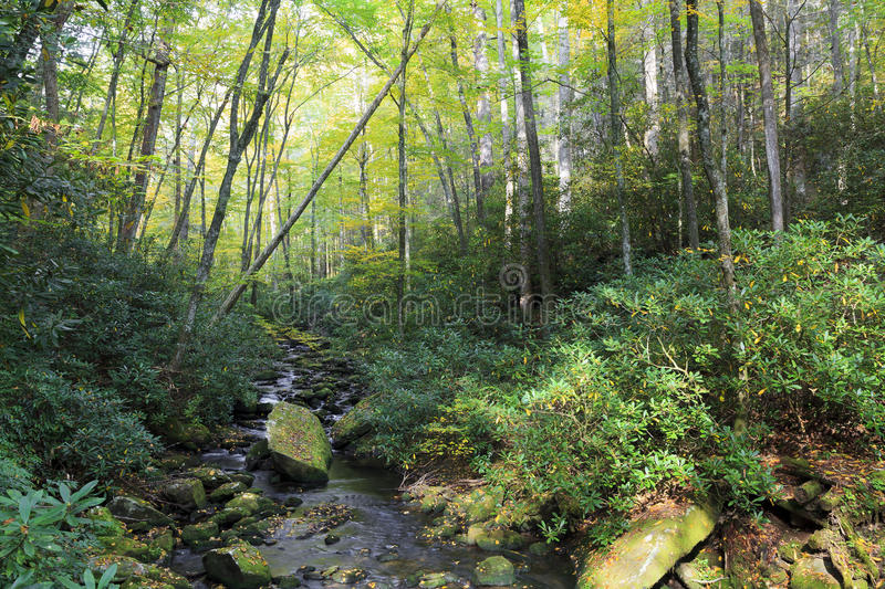 Download Stream In Joyce Kilmer Forest In North Carolina Stock Image - Image of graham, peaceful: 60257541