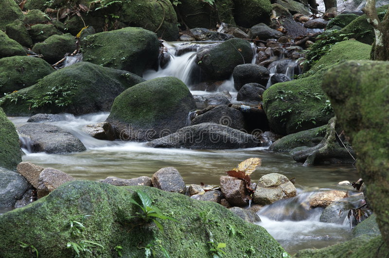 Stream in a jungle stock photography