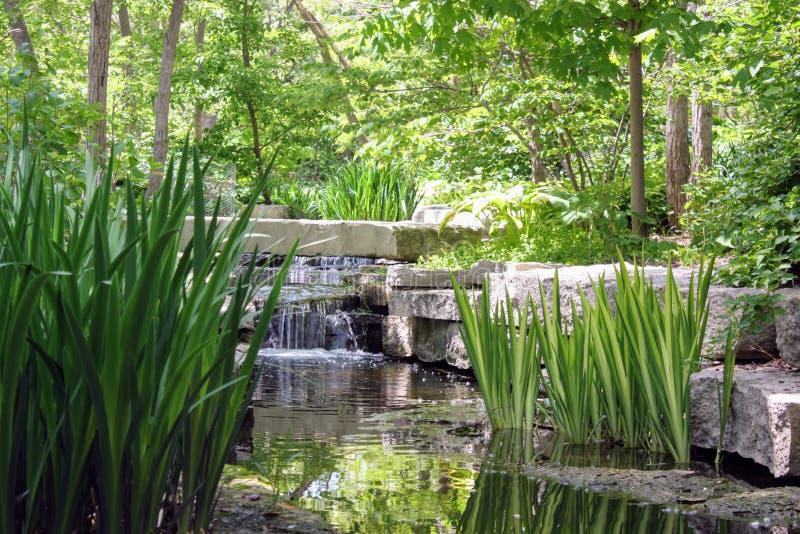 Stream at Lauritzen Gardens royalty free stock photo