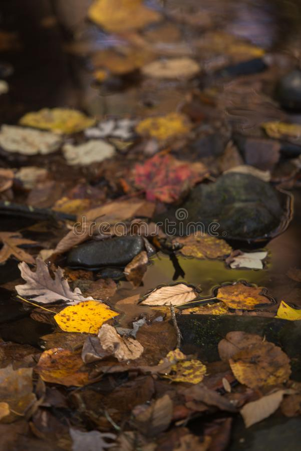The stream of leaves. Leaves fall to blanket the ground in a final display of simple beauty royalty free stock images