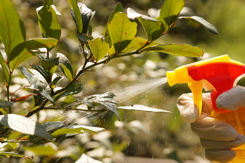 A stream of liquids highlighted by the sun. Spraying or sprinkling or plants with a spray. Spraying or sprinkling or plants with a spray. A stream of liquids royalty free stock photography