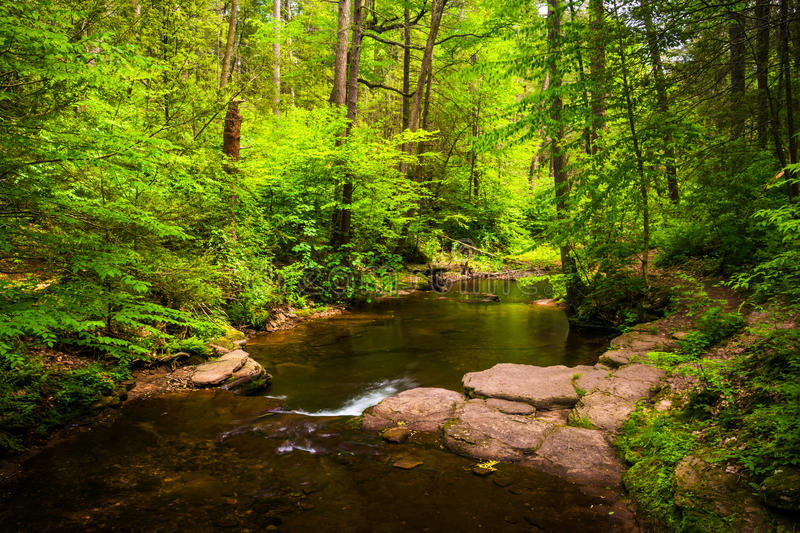 A stream in a lush forest at Ricketts Glen State Park, Pennsylvania. A stream in a lush forest at Ricketts Glen State Park, Pennsylvania stock photos