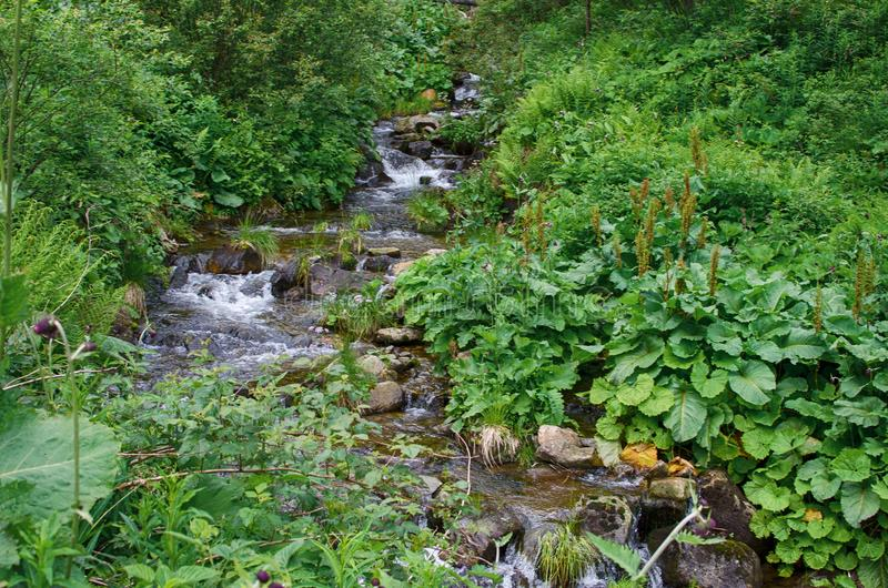 A stream in the mountains flows along the rocks and a stormy waterfall royalty free stock image