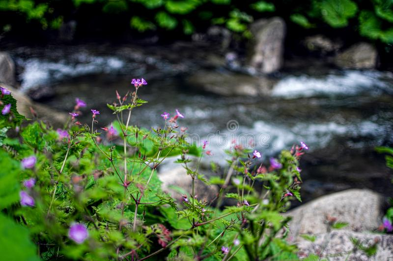 A stream in the mountains flows along the rocks and a stormy waterfall stock images