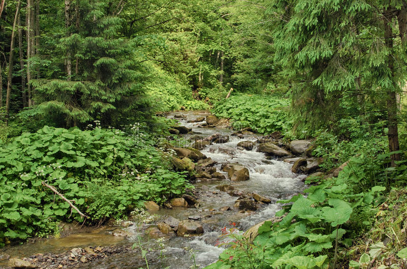 A stream in the mountains flows along the rocks and a stormy wat stock images