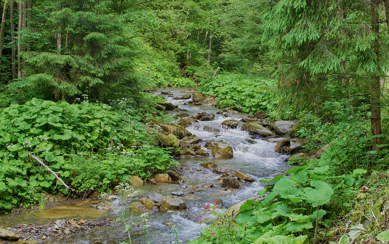A stream in the mountains flows along the rocks and a stormy wat royalty free stock image