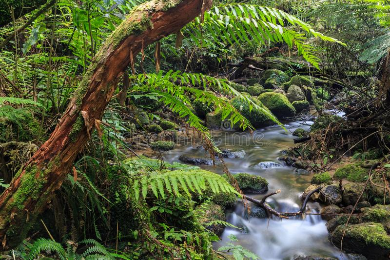 Stream in New Zealand forest landscape stock photo