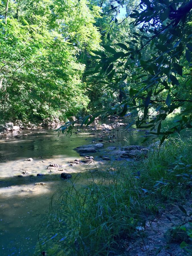 A stream in a park royalty free stock photography