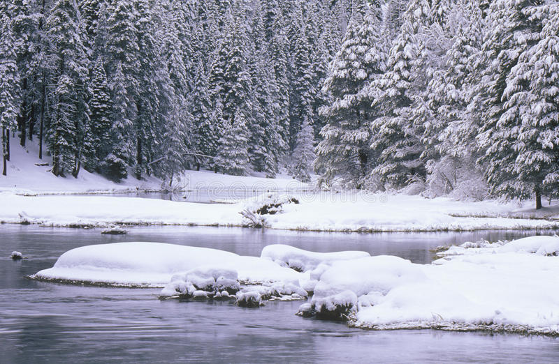 Download Stream And Pine Trees In Snow Stock Photo - Image: 26259596