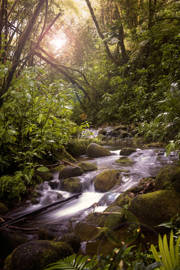 Download A Stream in the Rainforest stock image. Image of stream - 2072973