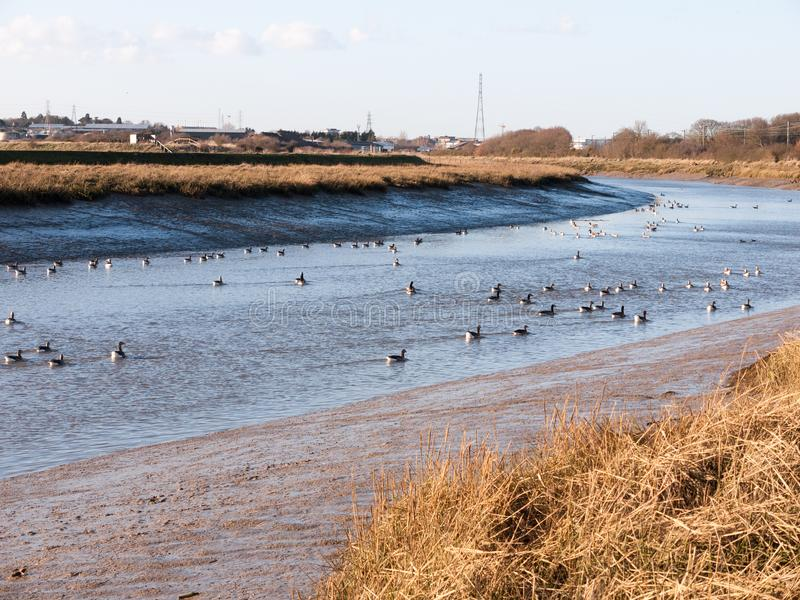Stream river landscape view blue water coast essex estuary with. Geese; essex; england; uk stock images