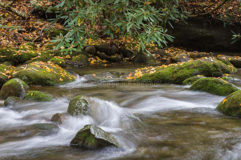 Stream with rocks and rhododendron, swift water, fall leaves. Horizontal aspect royalty free stock photos