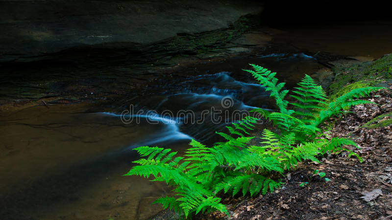 Download Stream side Ferns stock photo. Image of hills, green - 25895398
