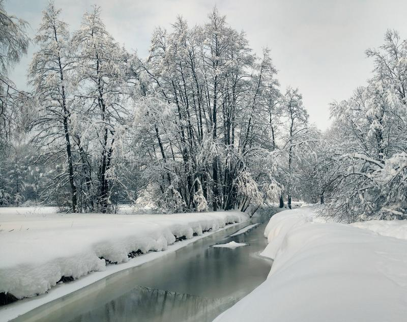 Stream and snow caps on the trees. stock photos