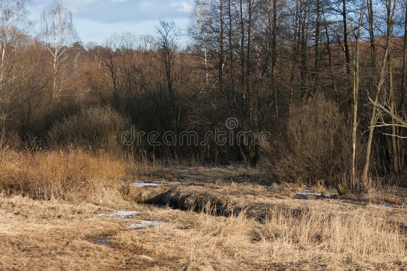 Stream in the spring forest at sunset. Remains of snow in April stock image