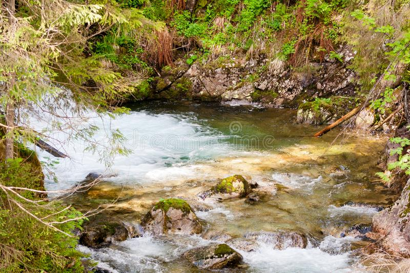 A stream in the Tatra National Park. Flowing clear mountain water. And around a lot of greenery royalty free stock images