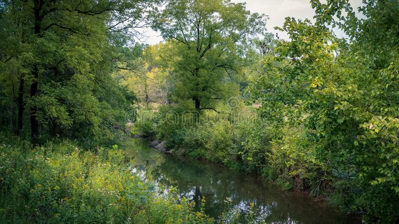 Stream though Wooded Forest royalty free stock image