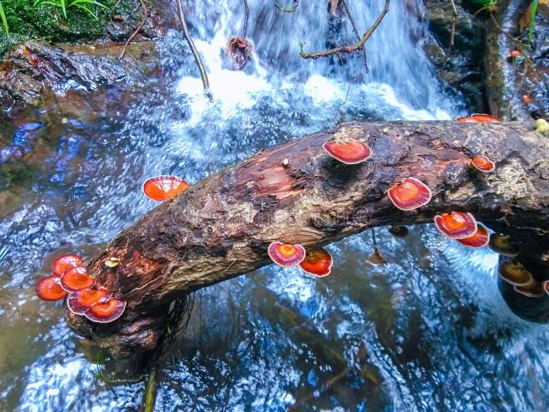 The trees in the stream grow many mushrooms. royalty free stock photo