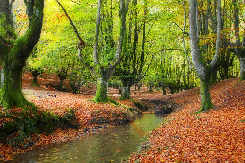 Download Stream Through The Trees In A Beautiful Beech Forest In Autumn Royalty Free Stock Images - Image: 28219199