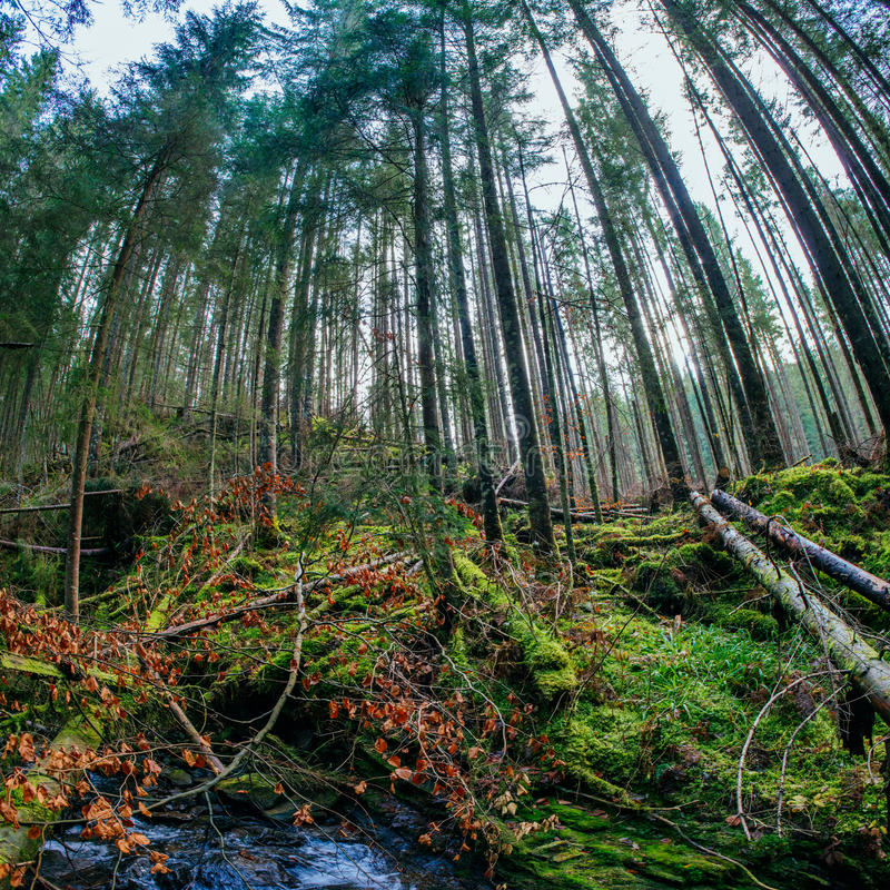 Stream between the trees. River in the mountain forest, fallen trees and moss on it stock photos