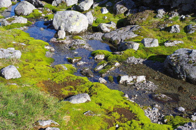 Stream in the tundra. Among the moss and stones stock images