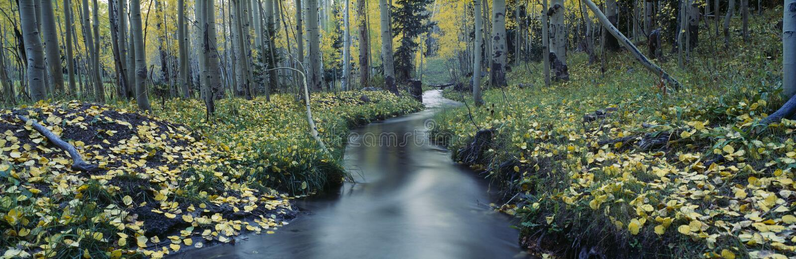 Stream in Uncompahgre National Forest royalty free stock photography