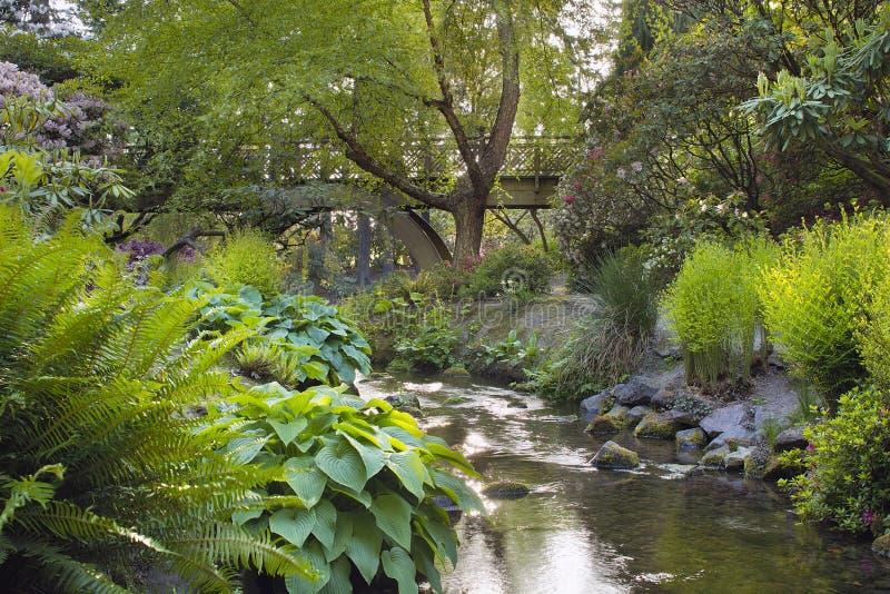 Stream Under the Wooden Bridge stock images