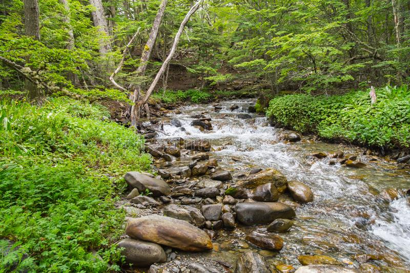 Stream in Ushuaia Forest stock image