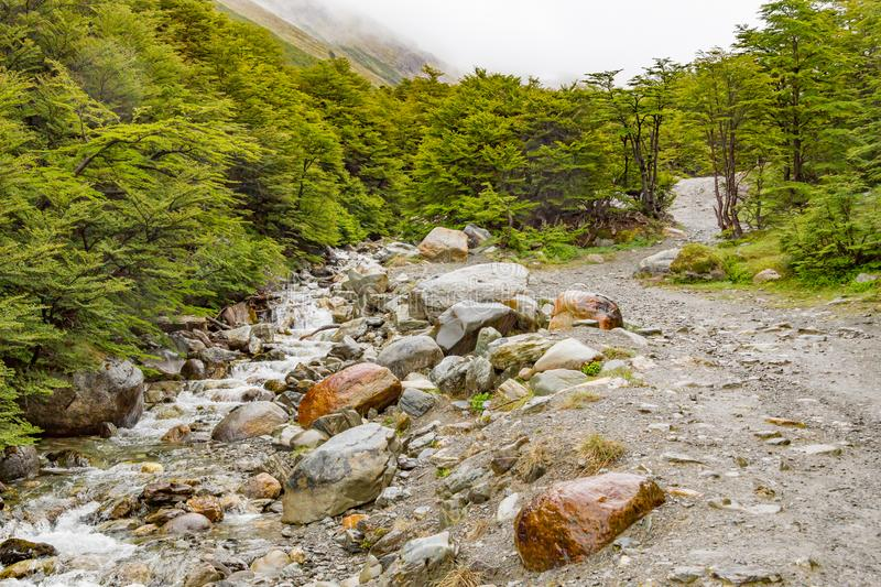 Stream in Ushuaia Forest royalty free stock photography