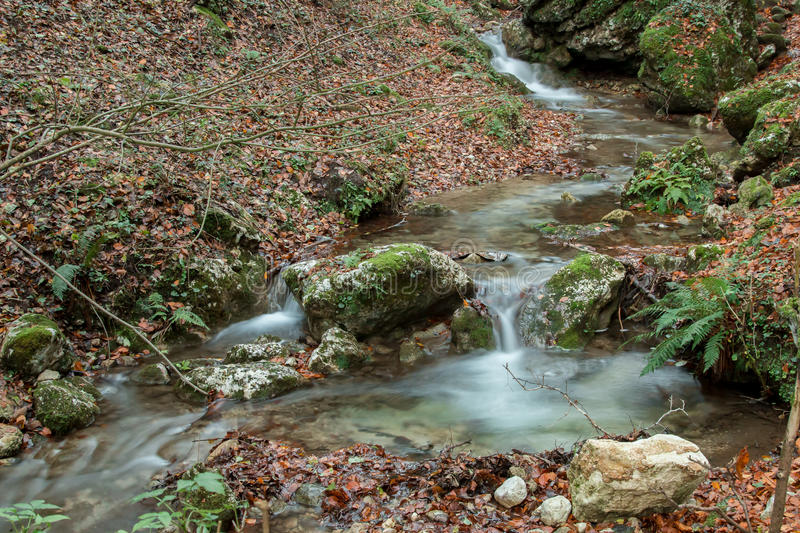 Stream was among the leaves royalty free stock photos