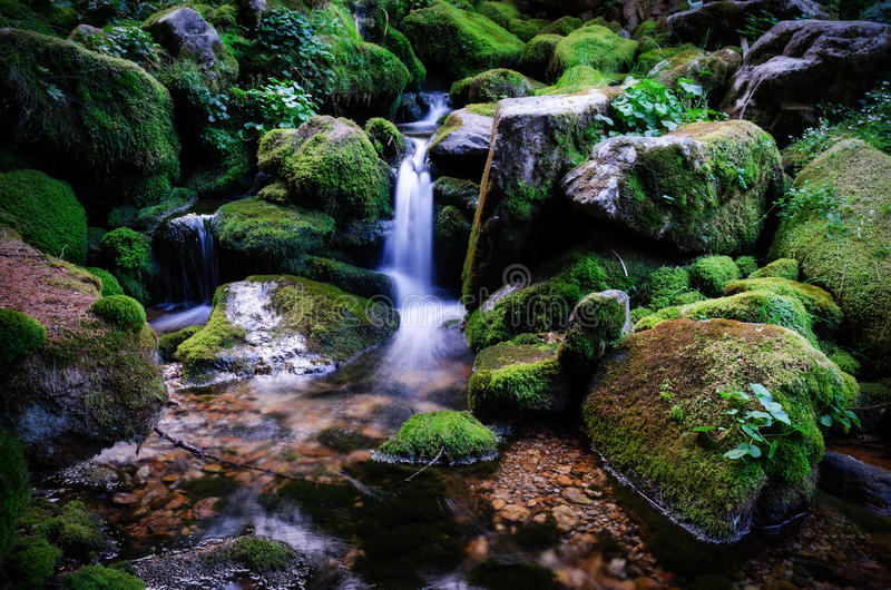 Stream of water. With little waterfall flowing through rocks covered by moss stock photography