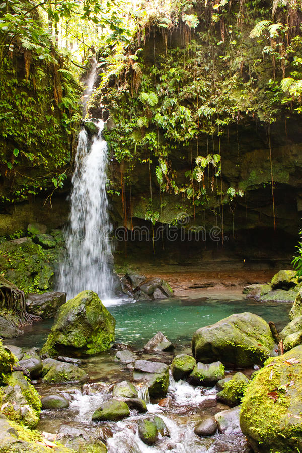 Download Stream With Waterfall In Lush Jungle Stock Photo - Image: 21276160