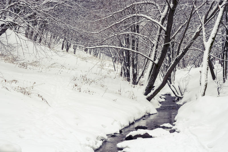 Stream in winter forest stock photo