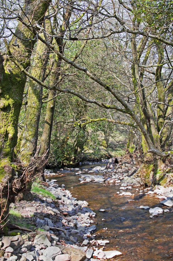 Stream in the Woods royalty free stock image