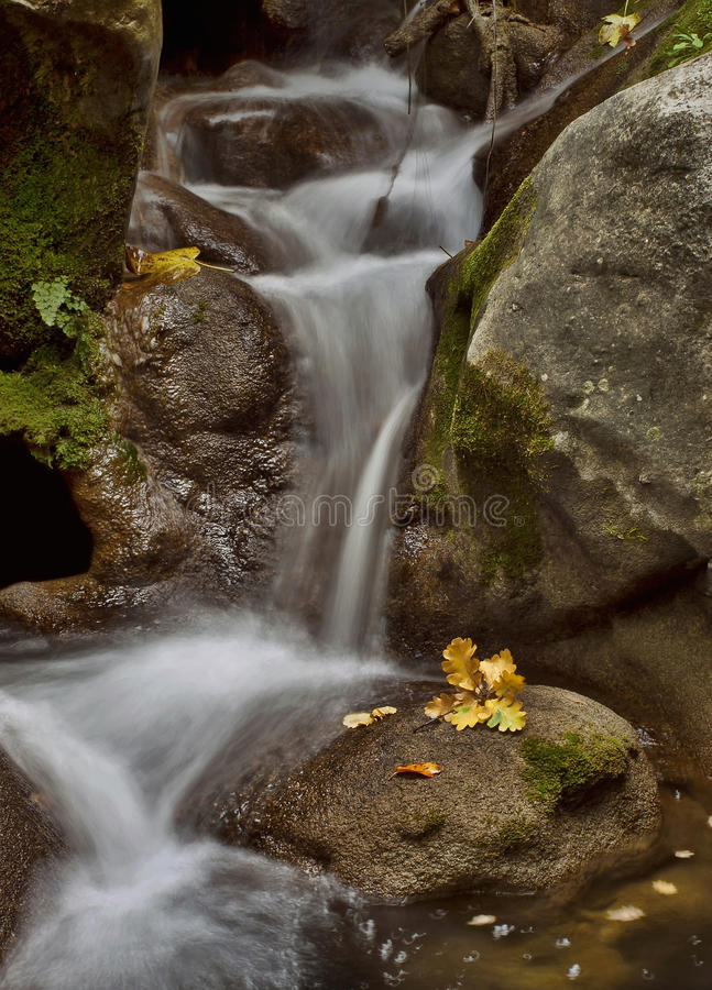 Stream and yellow leaf royalty free stock photography