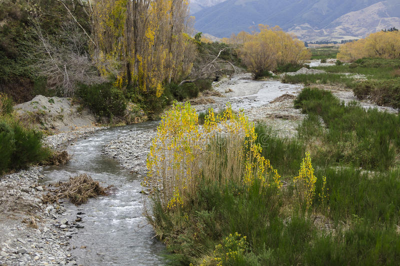 Stream. And yellows leaf and field in newzealand stock photography